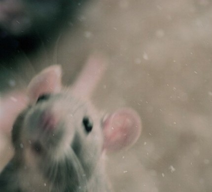 Rat Photography at its best